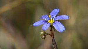 BC_Flower_02