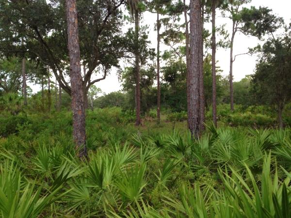 ForestPalmetto