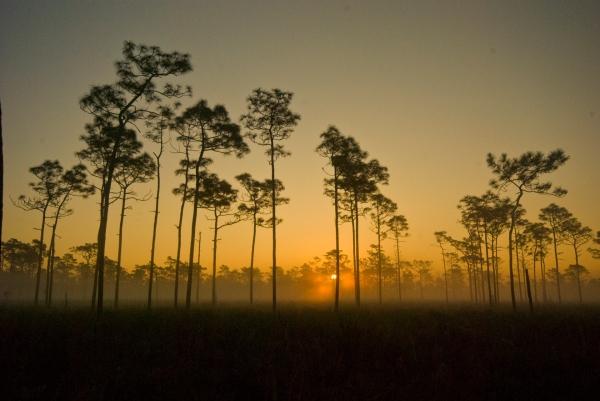 ForestSunset