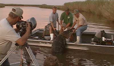 Elam filming a gator being pulled out of the Apalachicola river.